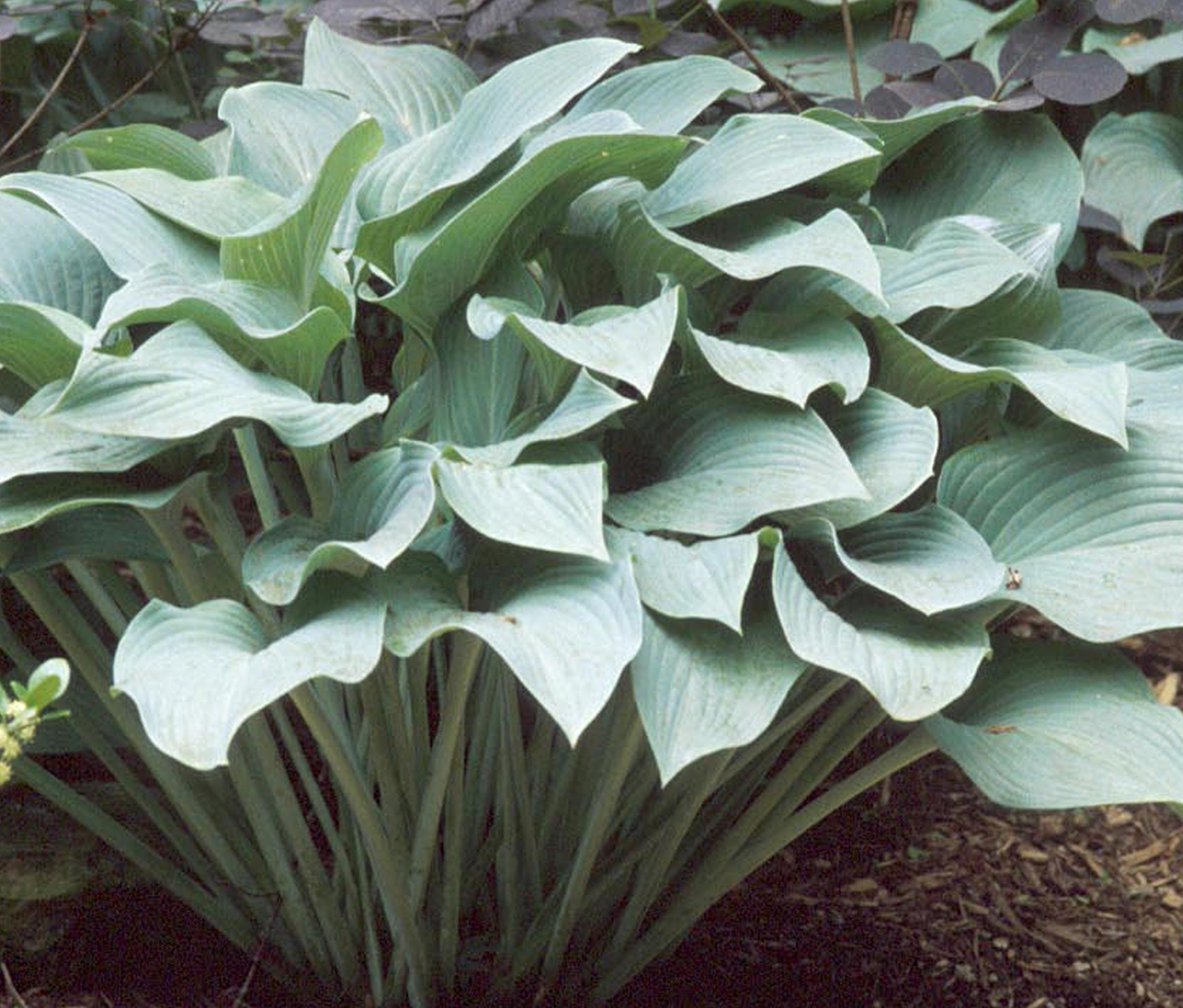 Premier Plant Solutions