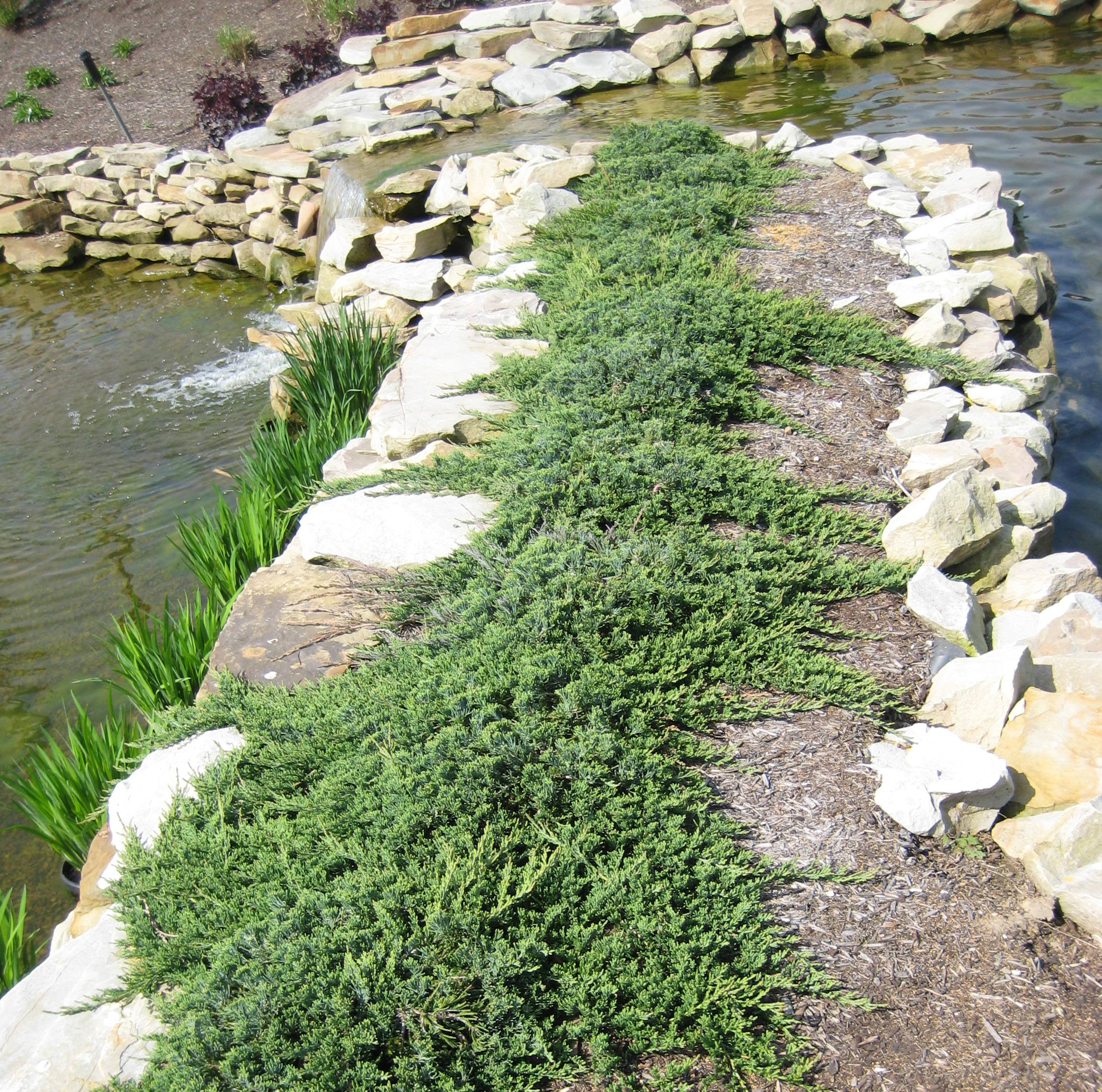 Japanese rock gardens history - Willoway Nurseries Inc The Midwest S Premier Wholesale