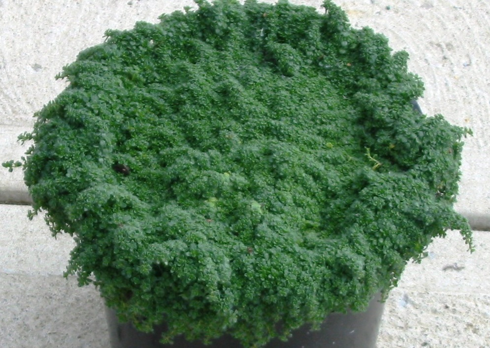 Willoway Nurseries Inc The Midwest S Premier Wholesale