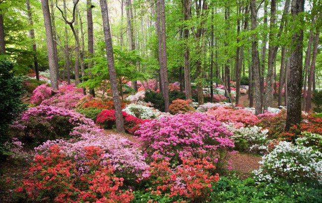 Azalea for Places to stay near callaway gardens